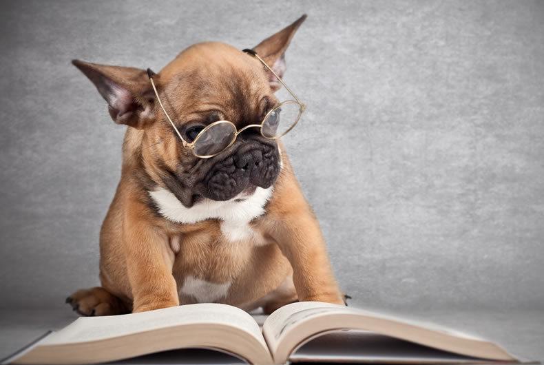 Un Cane Educato è Un Cane Felice