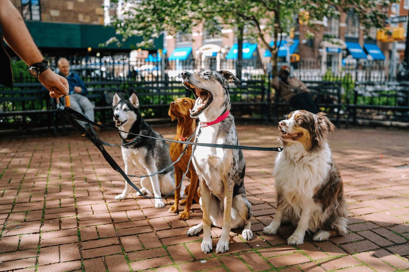 Il Guinzaglio Migliore Per L'addestramento Del Cane