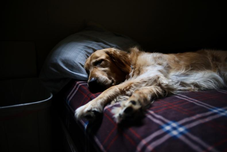 Le 5 REGOLE Fondamentali Per Educare Il Cane
