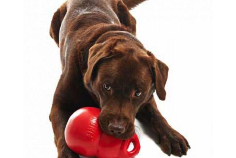 Giochi Per Cani: Il KONG