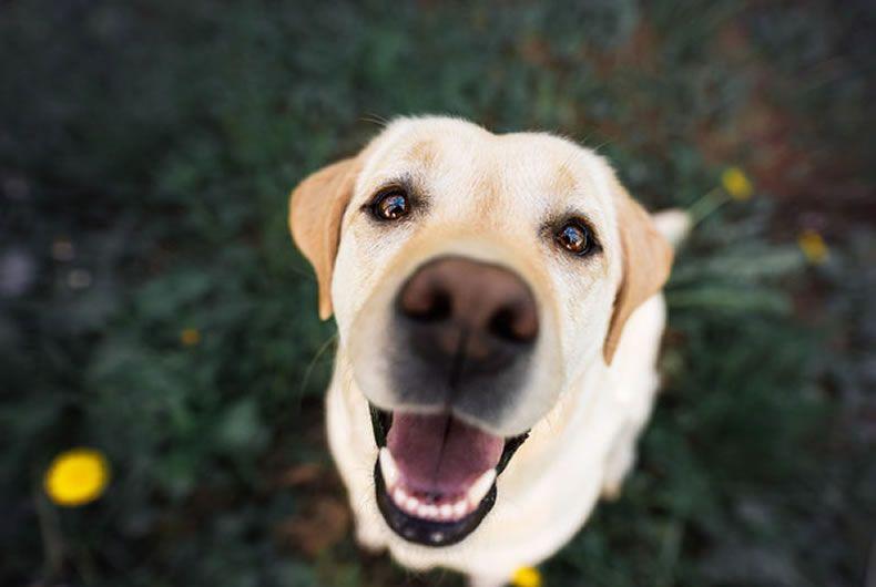 ESERCIZI IN CASA: Attenzione Del Cane