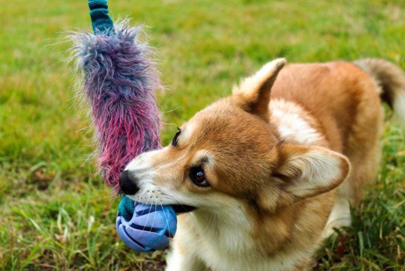 Coronavirus Quarantena Attività Da Fare In Casa Con Il Cane