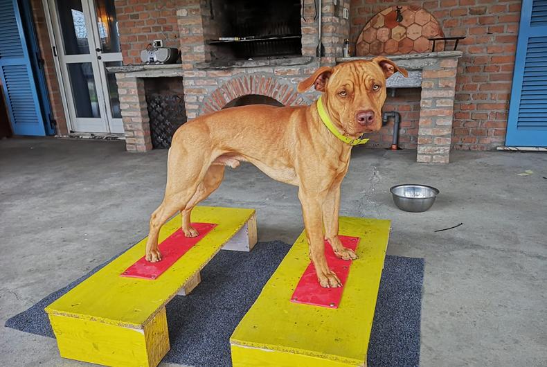 Ginnastica Per Cani Da Fare A Casa
