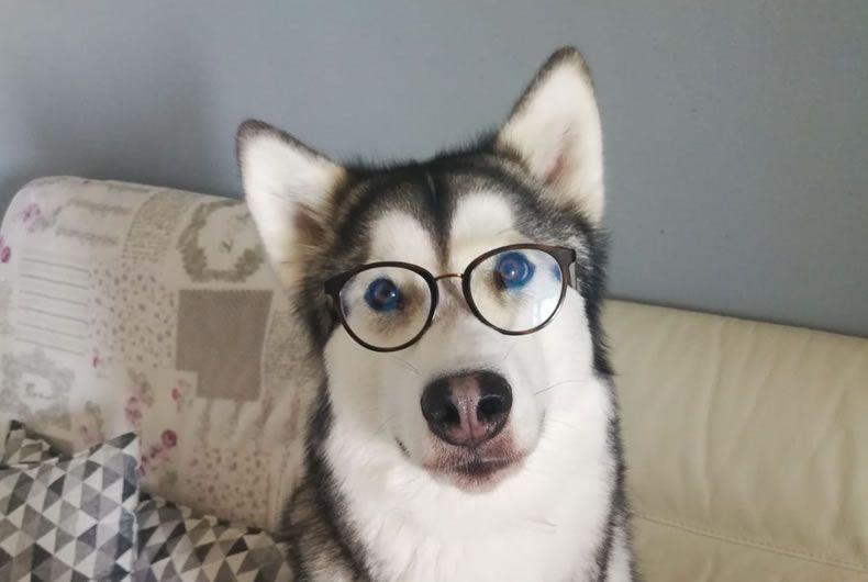 Giochi Di Intelligenza Per Cani